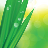 Vector Green Grass. Detail of Green Grass With Dew on Bokeh Background - Vector stock illustration