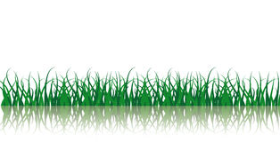 Vector From Green Grass Royalty Free Stock Photo