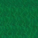 Vector green grass background Royalty Free Stock Photo