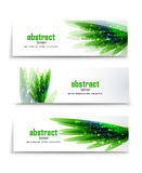 Vector green grass banners Stock Photo