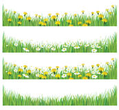 Vector green grass with chamomiles and dandelions. Stock Images