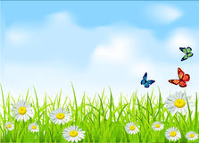 Vector green grass and daisies. The  green grass and daisies on a background of blue sky with butterflies Royalty Free Stock Photo