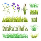 Vector green grass herb and flowers nature isolated on white background design template grassy elements illustration Stock Photography