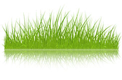 Vector green grass Stock Images