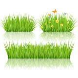 Vector green grass Royalty Free Stock Photo