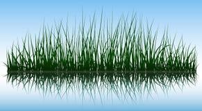 Vector green grass Stock Image