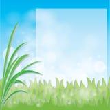 Vector green grass Royalty Free Stock Photos