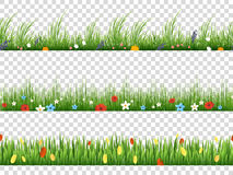 Vector green grass and spring flowers nature border patterns on transparent background. Vector illustration. Herbal and flower lawn border Royalty Free Stock Image