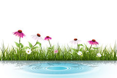 Vector Green grass, white daisy flower with reflection in water Stock Photography