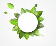Vector green leaf banner Stock Photos