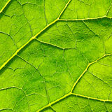 Vector green leaf macro background. EPS 8 Stock Images