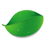 Vector green leaf. Green leaf with water drops Royalty Free Stock Photo