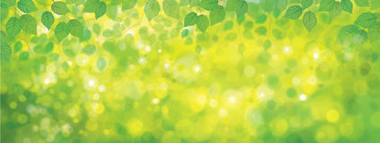 Vector green leaves background. Royalty Free Stock Photos
