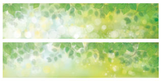 Vector green leaves backgrounds. Royalty Free Stock Image