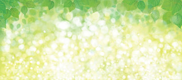 Vector green leaves  banner. Stock Photography