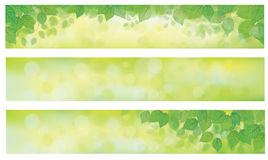 Vector green leaves banners. Vector green leaves on  spring, bokeh banners Royalty Free Stock Photography