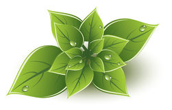 vector green leaves eco design Royalty Free Stock Photo