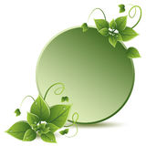vector green leaves eco design Royalty Free Stock Photography