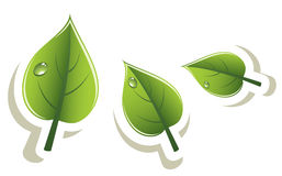 vector green leaves eco design Stock Image