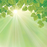 Vector of green leaves on sunny sky background. Royalty Free Stock Image