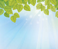 Vector of green leaves on sunny sky background. Stock Photo