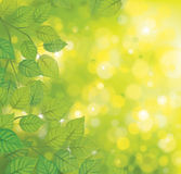Vector green leaves on sunshine background. Stock Photography