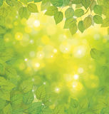 Vector green leaves on sunshine background. Royalty Free Stock Image