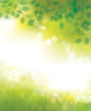 Vector green nature background. Royalty Free Stock Photography