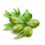Vector green olives  Royalty Free Stock Images