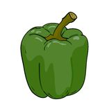 Vector green pepper Stock Photos