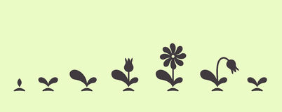 Vector green plant growing seed foliage flower set Royalty Free Stock Photography