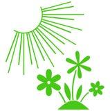 Vector green plants under sun illustration  on white Stock Images