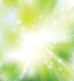 Vector green, rays background  Royalty Free Stock Images