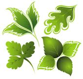 Vector green set of leaves Stock Image