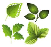 Vector green set of leaves Stock Images