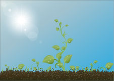Vector Green sprouts against the earth Stock Images