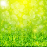 Vector green summer background with grass. Green summer background with grass vector Stock Photos