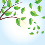 Vector green tree Royalty Free Stock Photos