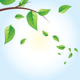 Vector green tree Royalty Free Stock Image
