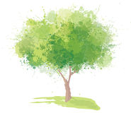 Vector green tree isolated. Background is my creative handdrawing and you can use it for spring, summer,  design and etc, made in vector, Adobe Illustrator 10 Royalty Free Stock Photos