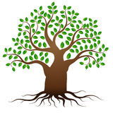 Vector green tree with roots Stock Photo