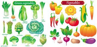 Vector green vegetables Stock Photos