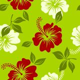 Vector green,white and red tropical summer hawaiian seamless pattern with tropical hibiscus flowers. Beautiul flower for decoration or design fabric Stock Photos
