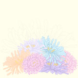 Vector greeting card. Vector design with asters for greeting card Stock Image
