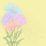 Vector greeting card. Vector design with asters for greeting card Stock Photos