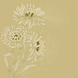 Vector greeting card. Vector design with asters for greeting card Stock Images