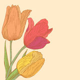 Vector greeting card. Vector design with tulips for greeting card Royalty Free Stock Image
