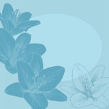 Vector greeting card. Vector illustration for greeting card with lilies Stock Photos