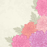 Vector greeting card. Vector illustration for greeting card with chrysanthemum Royalty Free Stock Image