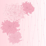 Vector greeting card. Vector illustration for greeting card with chrysanthemum Stock Photography